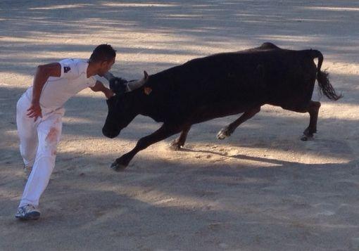 Tourisme en Provence : jeux taurins à Maussane les Alpilles